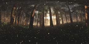 Deep Forest with Fireflies VR360 3D Illustration VR 360° Photo