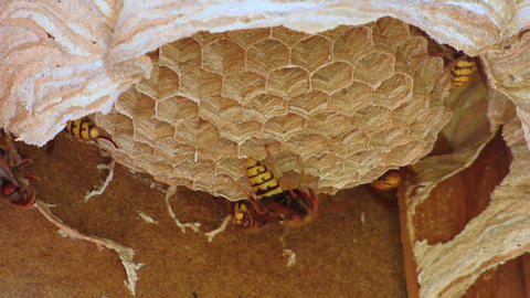 Wasp And Bee 2
