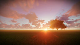 Solitary tree on green meadow, timelapse sunset Animation