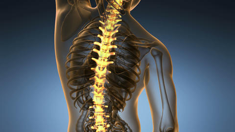 backbone. backache. science anatomy scan of human spine bones glowing Animation