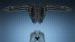 Loop Science Anatomy Tomography Scan Of Human Body Footage