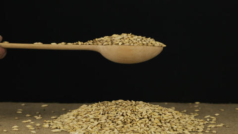 Hand raises a wooden spoon with barley grains. Grain falls from a spoon onto a Live Action