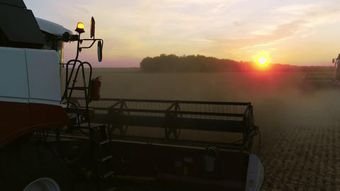 Wheat harvest. harvester harvests wheat in the field. harvesting. Agriculture Live Action