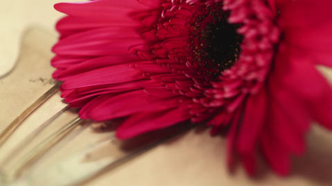 Male florist putts uses pencil on kraft paper. Red gerbera on kraft papers Live Action