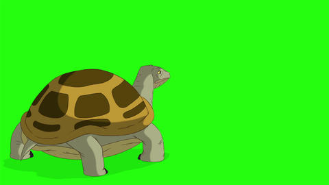 Swamp turtle goes out of frame chroma key CG動画