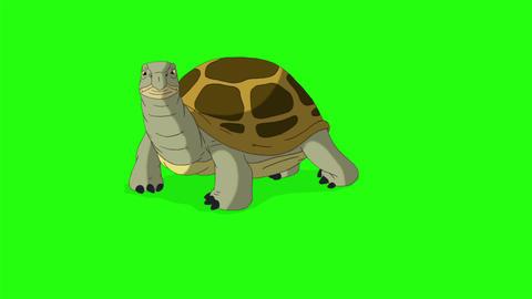 Big swamp turtle buries itself in the sand chroma key CG動画