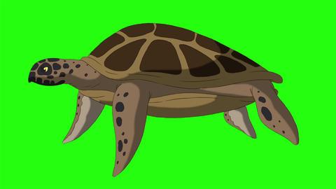 Big swamp turtle swims underwater chroma key CG動画