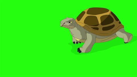 Big swamp turtle comes and goes chroma key CG動画