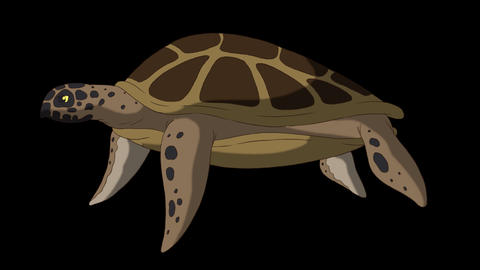 Big swamp turtle swims underwater alpha mate CG動画
