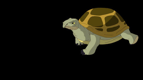Big swamp turtle comes and goes alpha mate CG動画