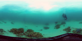 Coral reef with fish underwater 360VR. Leyte, Philippines Video de realidad virtual (RV) en 360°