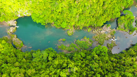 Loboc river in the jungle. Bohol, Philippines ライブ動画