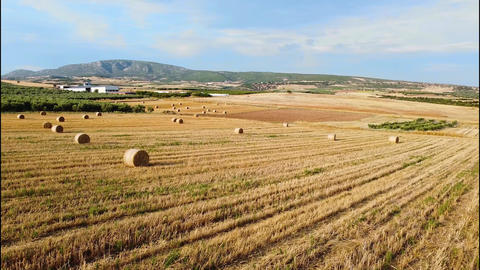 Agriculture and country lifestyle concept. Bales of harvested wheat on agricultural field. Aerial Live Action