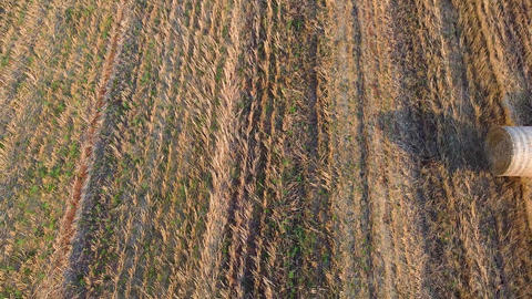 Flight over Three bales of harvested wheat on agricultural field. Aerial view Live Action