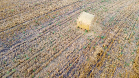 Two bales of hay of harvested wheat on golden agricultural field. Aerial view Live Action
