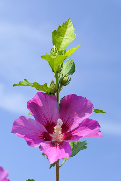 A beautiful pink flower with a blue sky in the background Fotografía