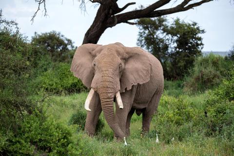An elephant in the savannh of a national park Fotografía