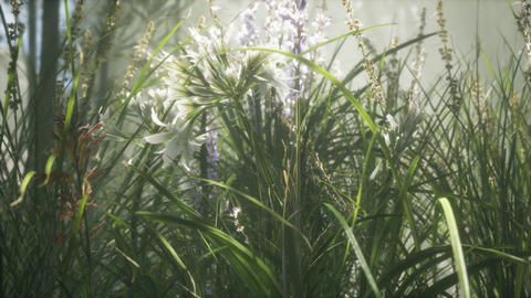 Grass flower field with soft sunlight for background GIF