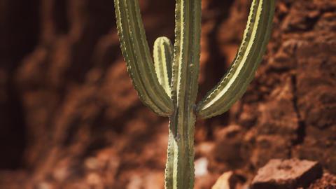 cactus in the Arizona desert near red rock stones GIF