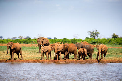 A waterhole in the savannah with some red elephants Fotografía