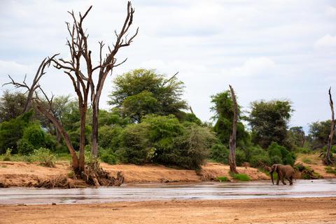 One big elephant walking along the river Fotografía