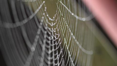 Beads of moisture on threads of spider's web GIF