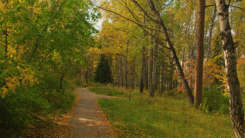 Beautiful autumn forest.Lots of autumn leaves.Path through the autumn forest Live Action
