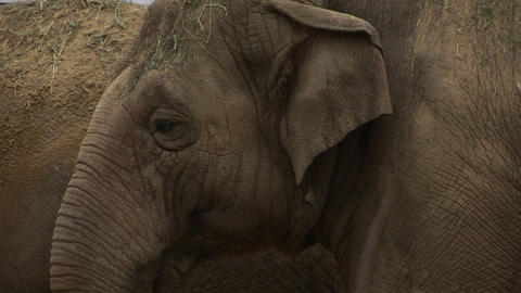 An elephant eats Stock Video Footage
