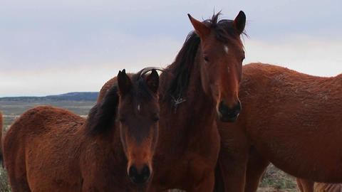 Wild horses graze in the desert Stock Video Footage
