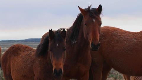 Wild horses graze in the desert Stock Video Footage