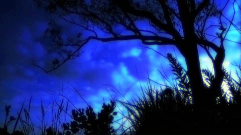 Time lapse of clouds passing over a tree silhouette Stock Video Footage
