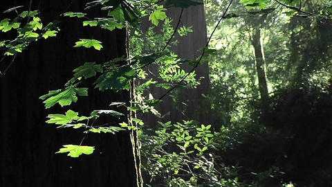 Insects fly on a calm afternoon in the forest Stock Video Footage