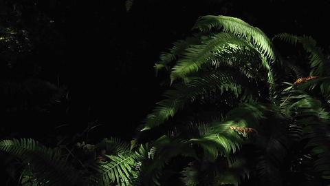 Shadows move across the forest floor Stock Video Footage