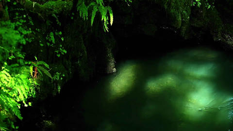 Sunlight filters through the forest into a tranquil stream Stock Video Footage