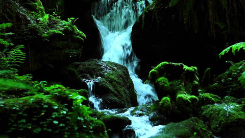 A stream flows through a forest Footage