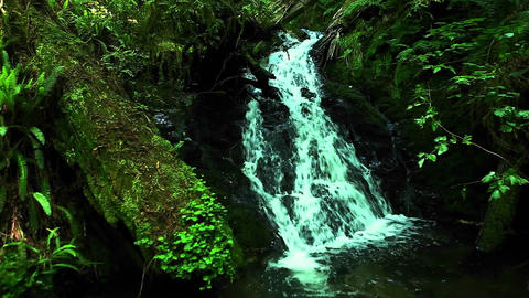 A small waterfall flows through a forest Stock Video Footage