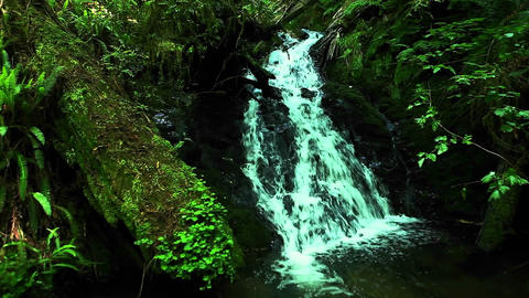 A small waterfall flows through a forest Footage