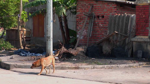 A stray dog wanders in the street in a small village in... Stock Video Footage