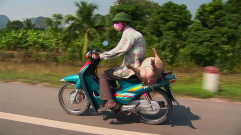 A Vietnamese farmer takes his pig to market on the back of a motorcycle Footage