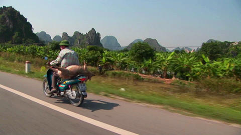 A Vietnamese farmer takes his pig to market on the back... Stock Video Footage
