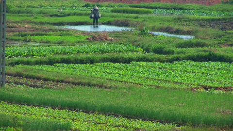 A Vietnamese farmer water his fields Stock Video Footage