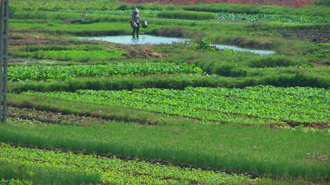 A Vietnamese farmer water his fields Stock Video Footage