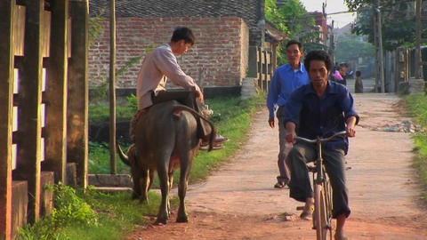 A man sits on a water buffalo and watches people pass in a rural village in Vietnam Footage