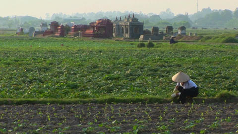 A woman works in the fields with some graves in the... Stock Video Footage