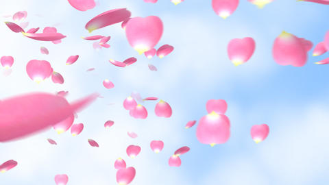 The petal which is scattered Animation