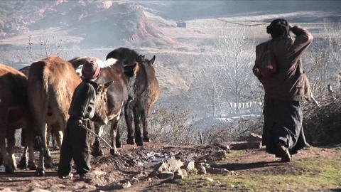A family of shepherds lead their cattle across a rural... Stock Video Footage