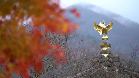 Golden bell Footage