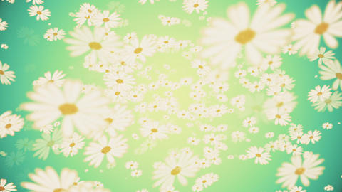 Beautiful White Flowers Motion Background 動畫