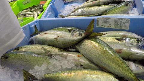 Fresh Fish On Display Footage