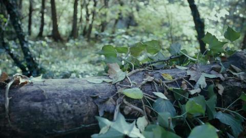 Forest fallen tree Footage